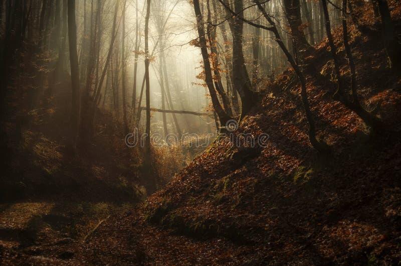 秋天迷惑了有太阳光芒和雾的森林 免版税库存照片