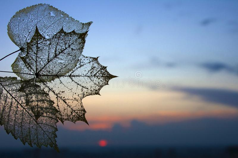 秋天透明骨骼离开背景 免版税库存图片