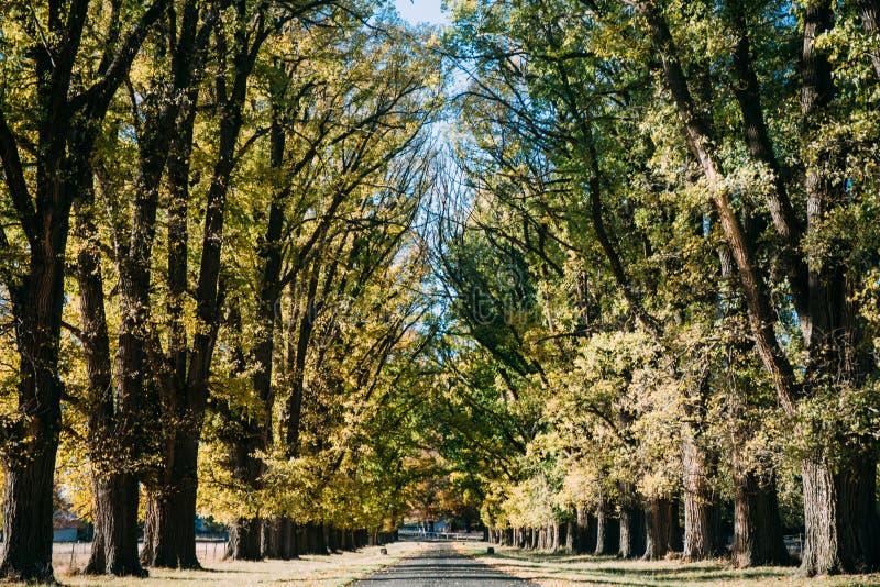 秋天道路在森林,自然秀丽里  免版税库存照片