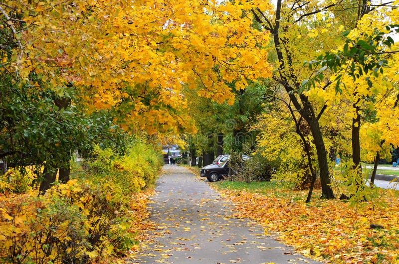 秋天都市风景 库存照片