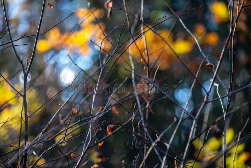 秋天金子上色了叶子有迷离背景和树枝 免版税图库摄影