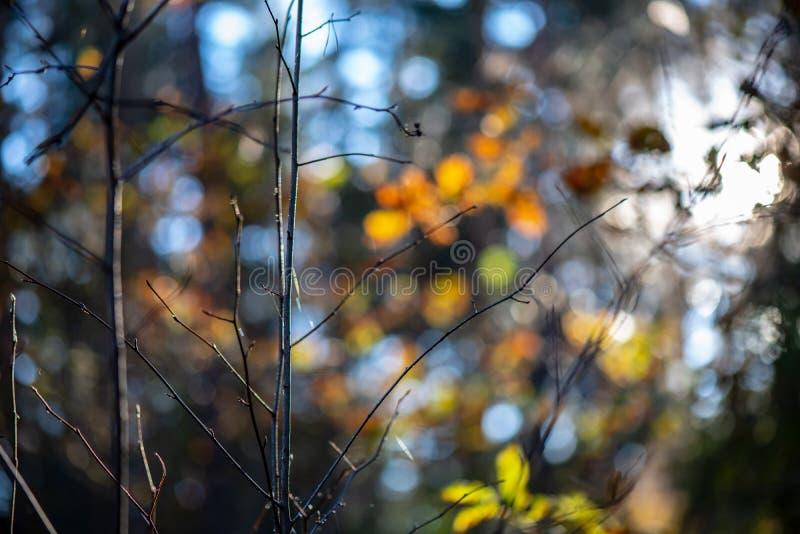 秋天金子上色了叶子有迷离背景和树枝 免版税库存照片