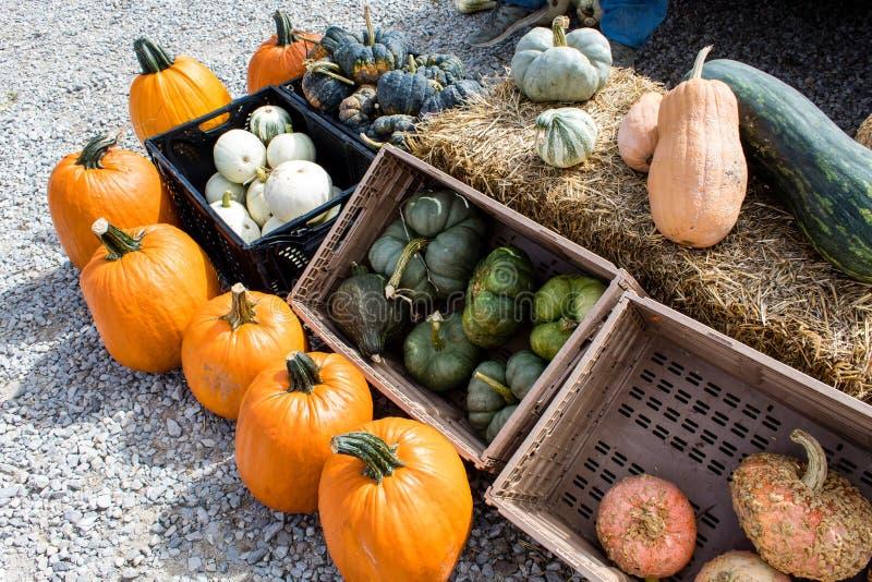 秋天金瓜、南瓜和南瓜在显示在秋天收获节日 免版税库存照片