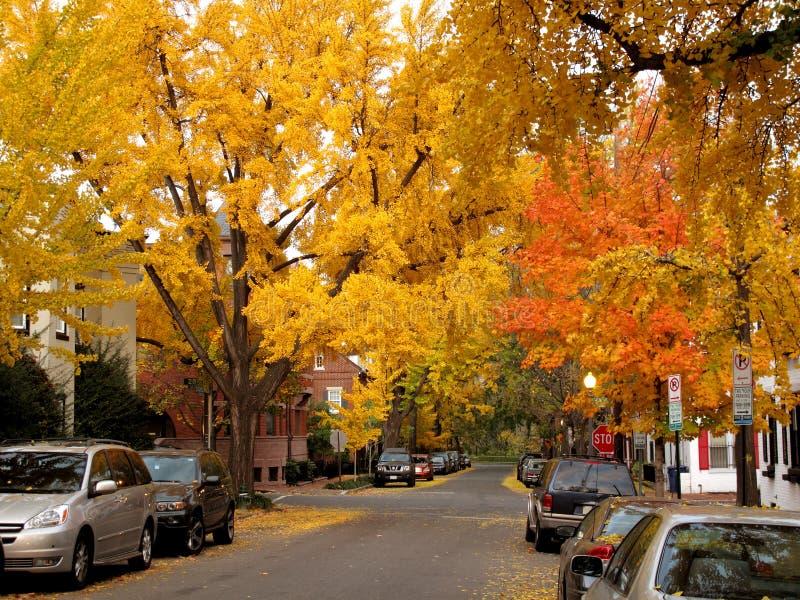 秋天金黄的乔治城 免版税库存图片