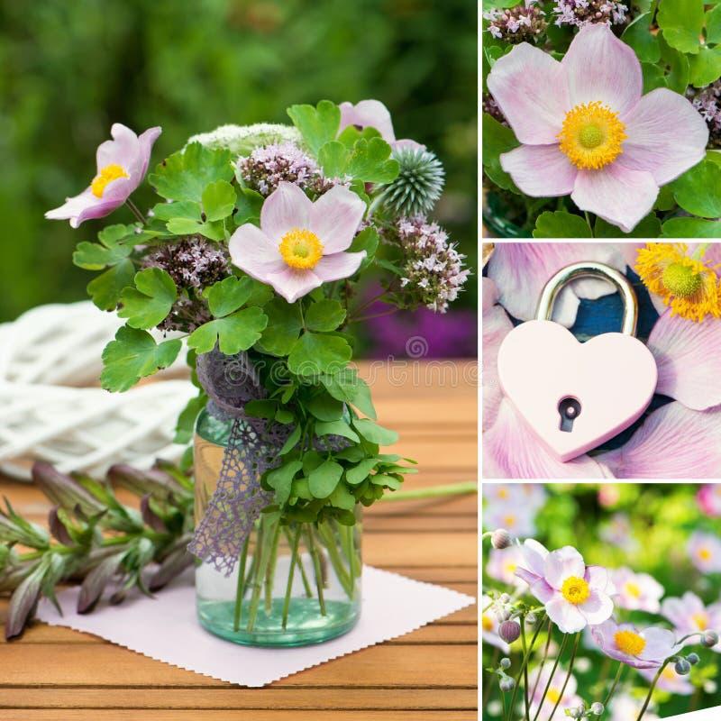 秋天银莲花属的各种各样的图片拼贴画  免版税库存图片