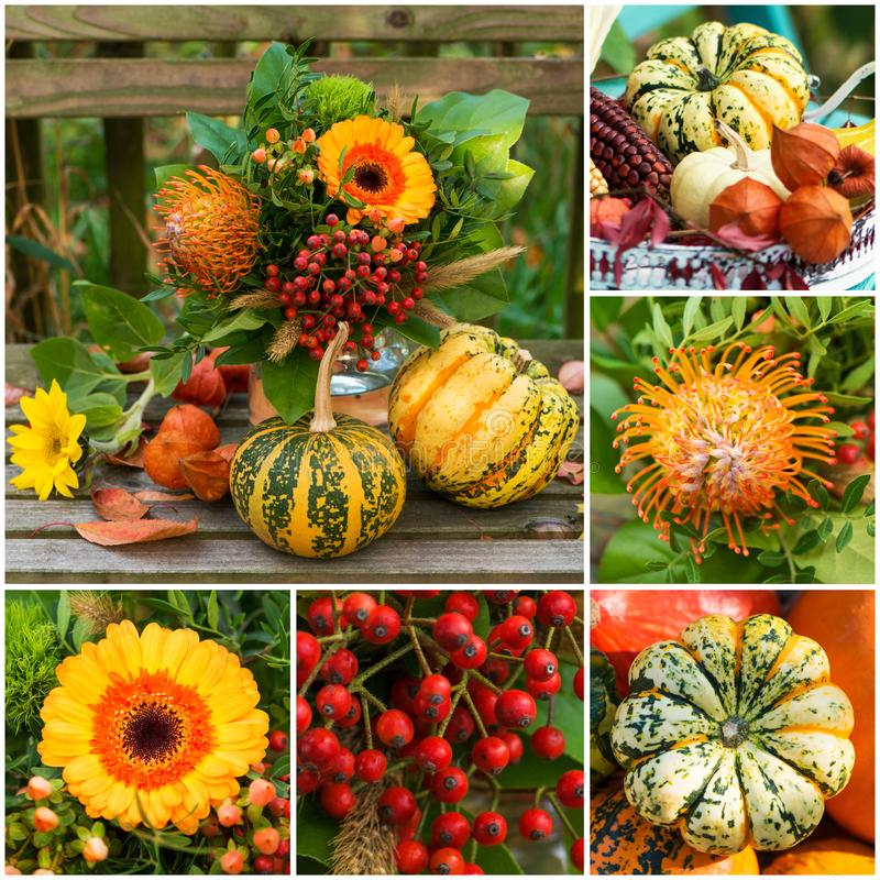 秋天银莲花属的各种各样的图片拼贴画  免版税库存照片