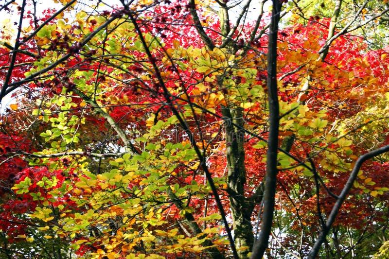 秋天银行上色德国莱茵河结构树黄色 库存照片