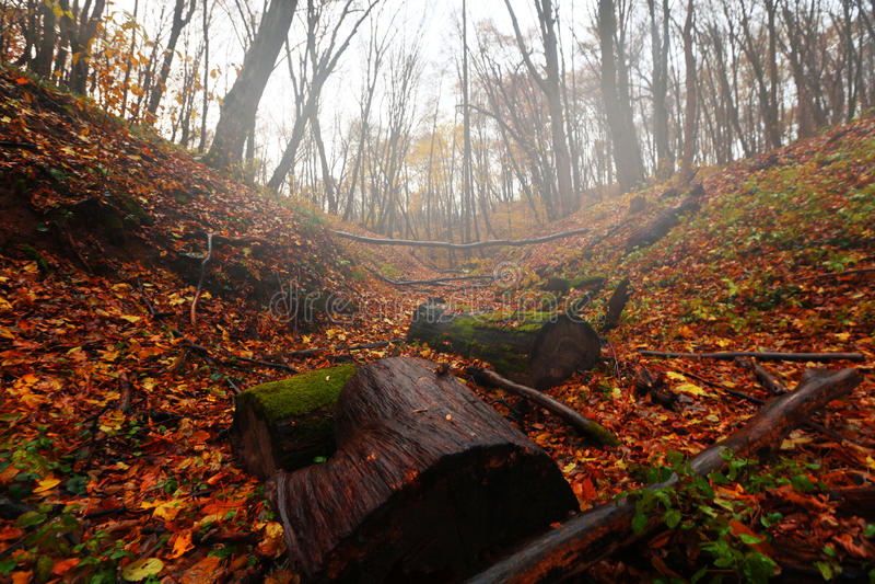 秋天银行上色德国莱茵河结构树黄色 免版税图库摄影