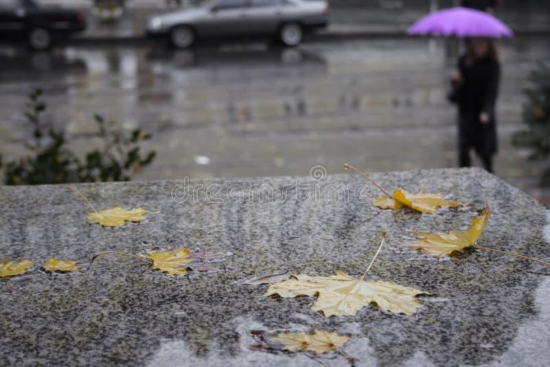 秋天雨 免版税库存照片