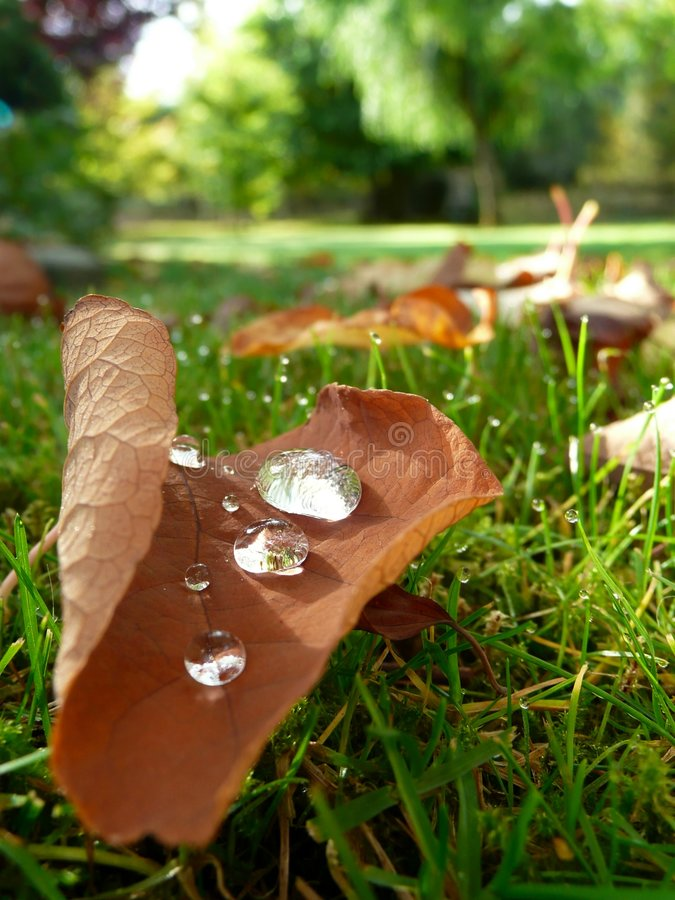 秋天露水划分为的叶子 免版税库存图片