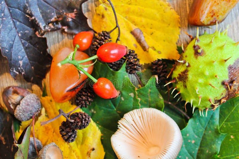秋天静物画橡子,栗子,与石头的蘑菇在木头b 免版税图库摄影