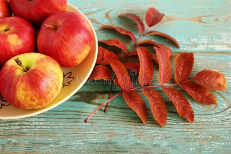 秋天静物画用在一块陶瓷板材的红色和黄色苹果和烘干花揪叶子在绿松石木背景的 免版税库存图片