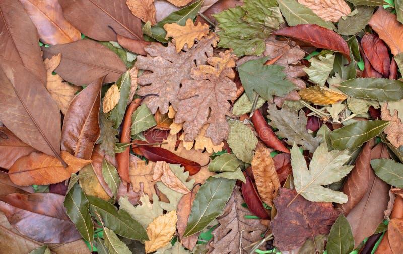 秋天静物画,烘干了充分的框架表面上的叶子 库存照片