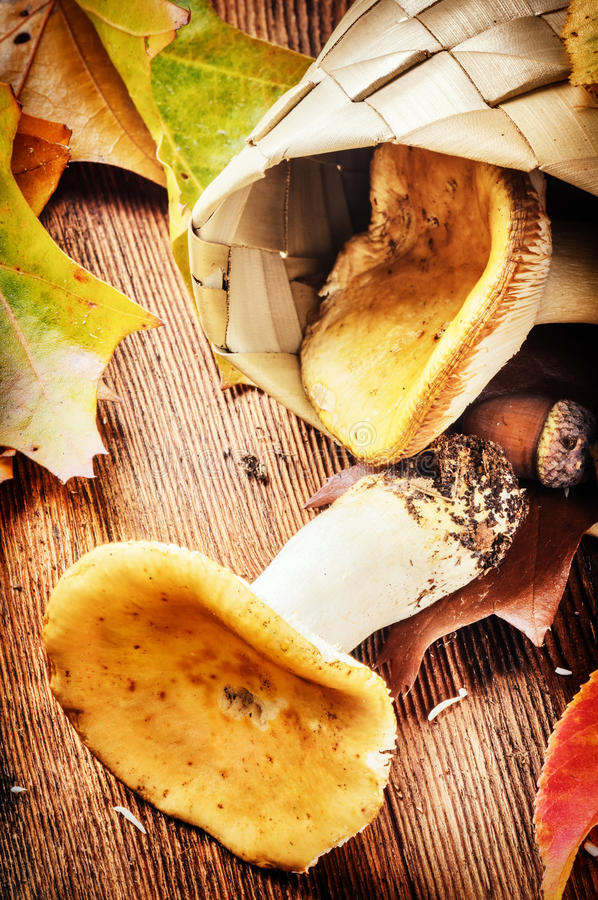 秋天静物画用可食的蘑菇(红茹属) 库存照片
