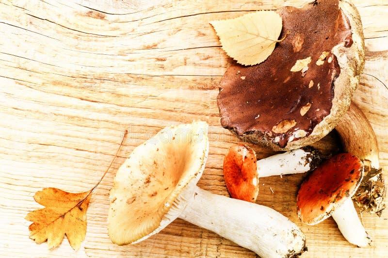 秋天静物画用森林蘑菇 库存照片
