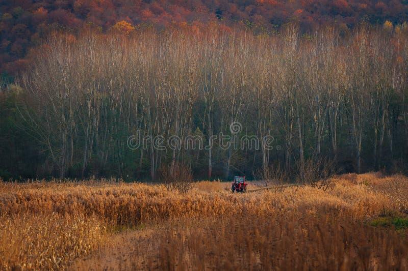 秋天领域在罗马尼亚 免版税图库摄影