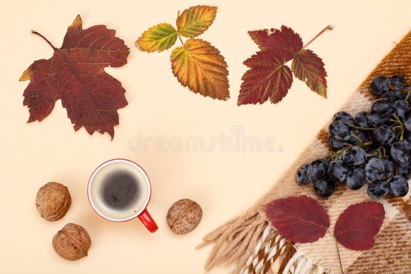 秋天题材 干燥叶子、咖啡,核桃和格子花呢披肩用葡萄在米黄背景 库存照片
