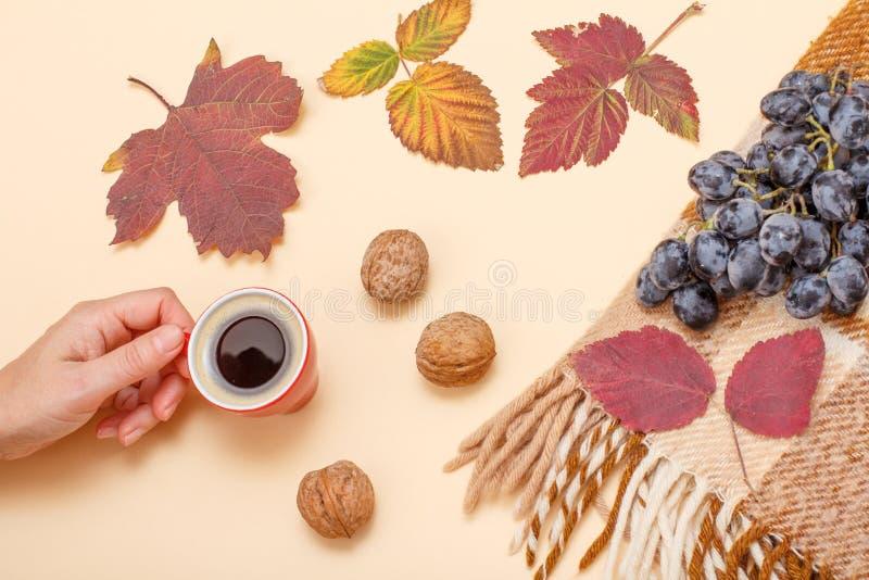 秋天题材 干燥叶子、手有咖啡的,核桃和格子花呢披肩用葡萄在米黄背景 图库摄影