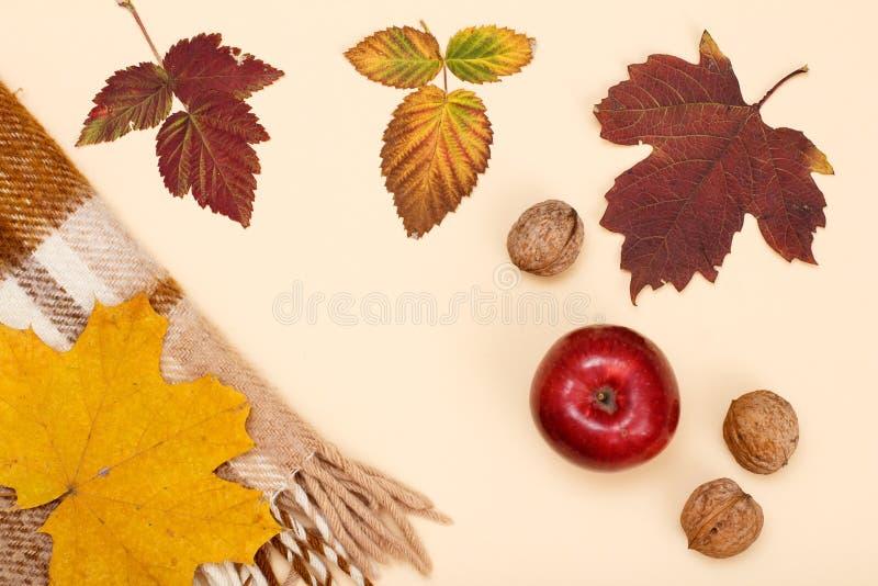 秋天题材 干燥叶子、苹果、核桃和格子花呢披肩在米黄背景 免版税库存图片