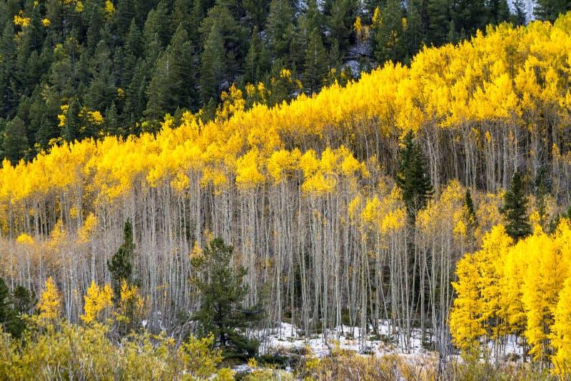 秋天颜色和雪在科罗拉多 库存图片