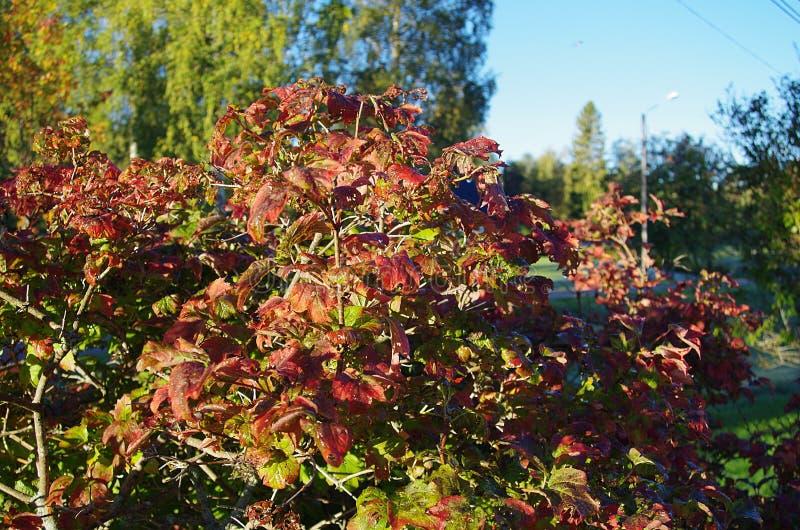 秋天颜色在一个晴朗的早晨 库存照片