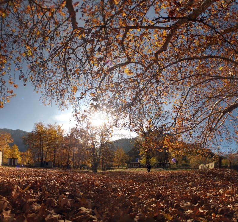 秋天颜色在从阿达纳,土耳其的Belemedik自然公园 免版税库存照片