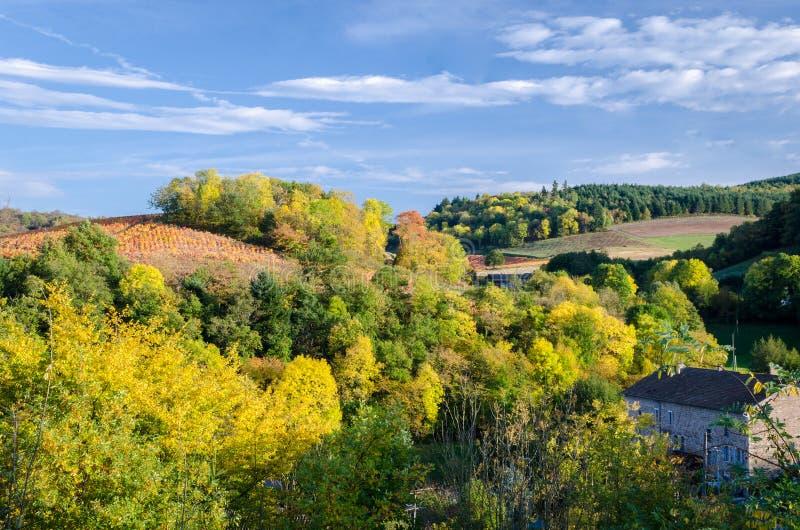 秋天颜色在博若莱红葡萄酒 免版税库存照片