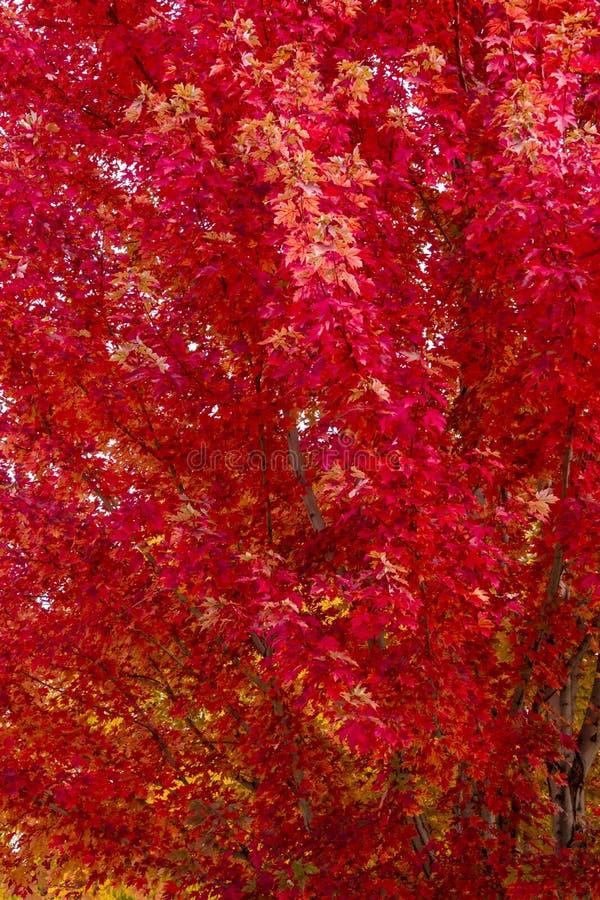 秋天颜色在城市 免版税库存照片