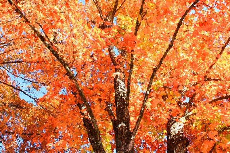 秋天颜色在阿肯色 免版税库存照片