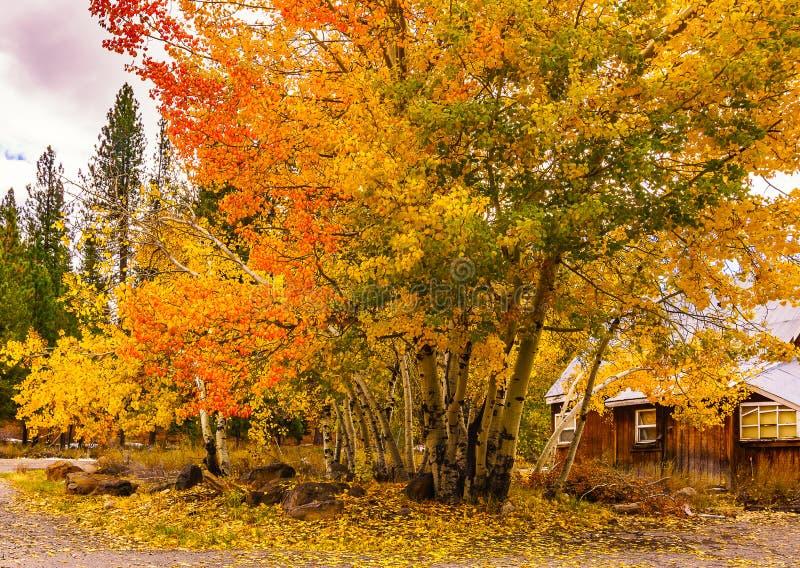 秋天颜色在Truckee,加利福尼亚 图库摄影