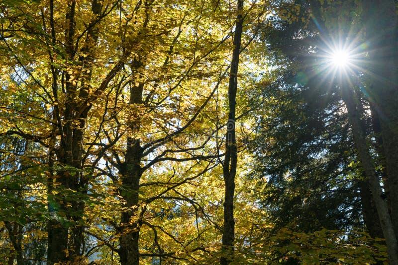秋天颜色的森林与秋叶和太阳发光 库存照片