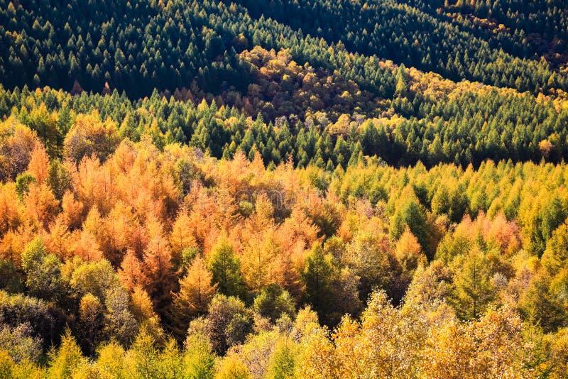 秋天颜色的森林 免版税库存照片