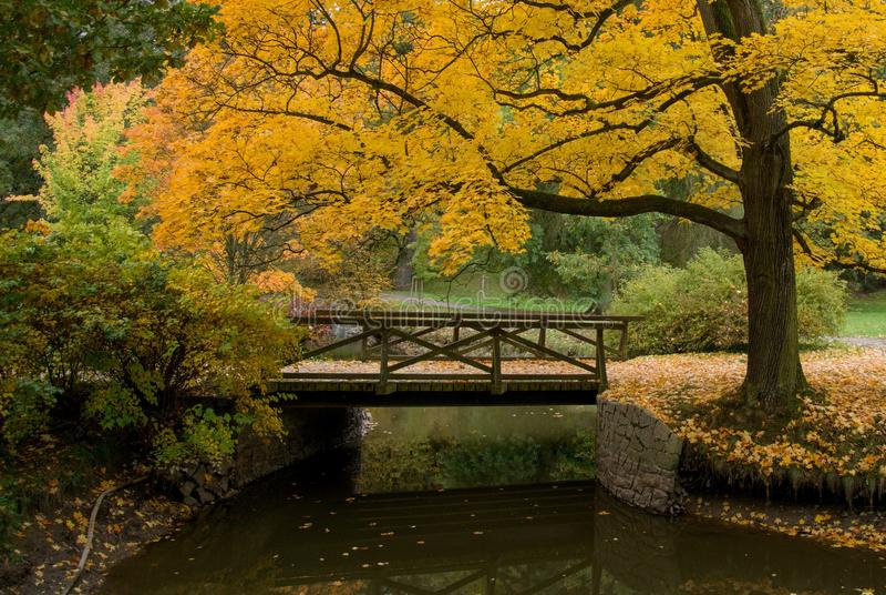 秋天颜色的都市公园 库存图片