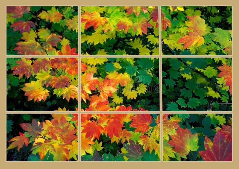 秋天颜色通过窗玻璃 免版税库存图片