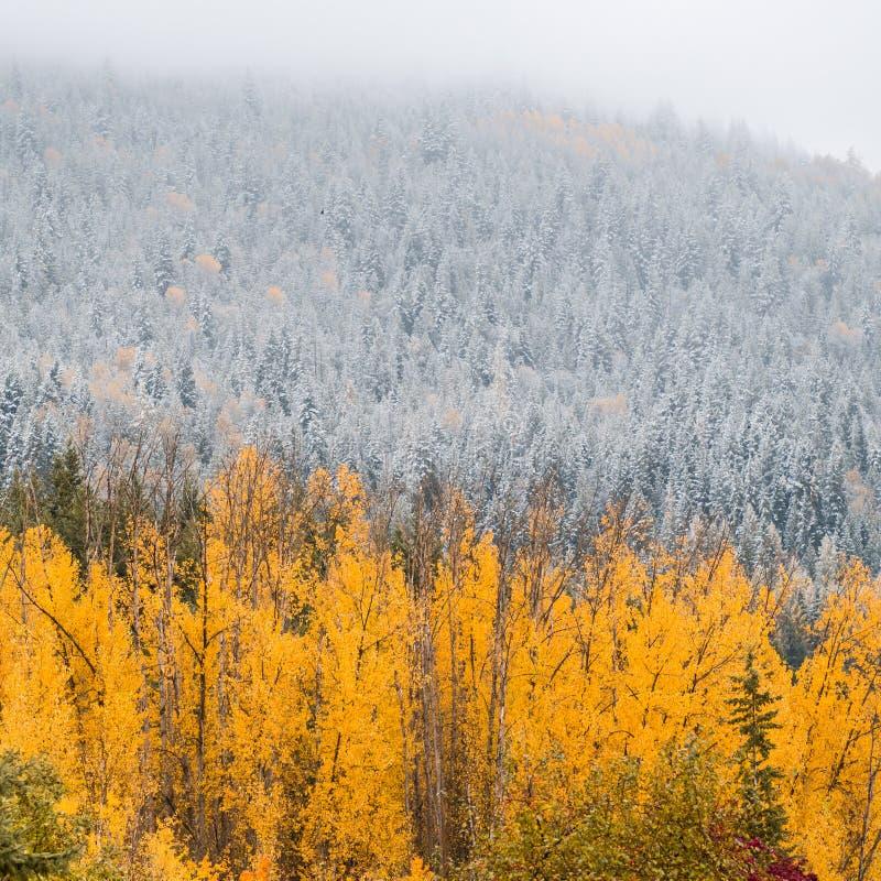 秋天颜色,冬天雪 库存照片