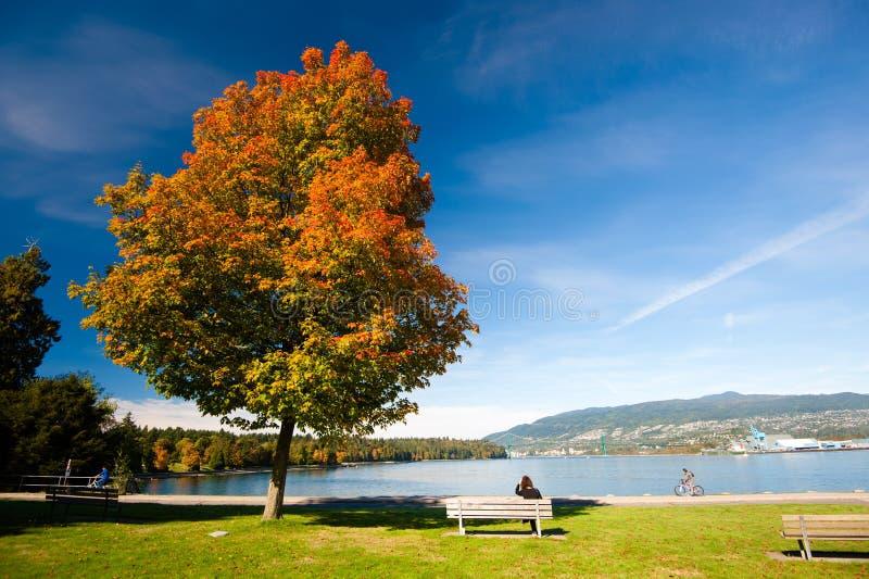 秋天颜色-史丹利公园,温哥华 库存照片