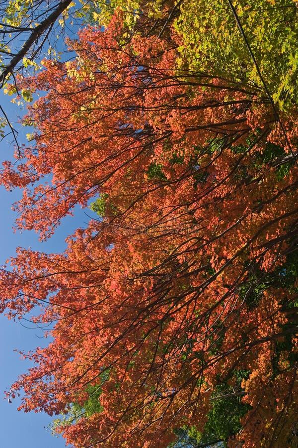 秋天颜色 库存图片