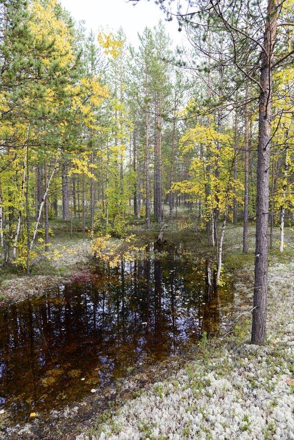 秋天风景俄国森林寒带草原 库存图片