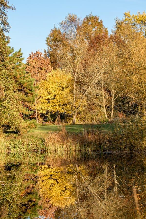 秋天风景和池塘 免版税图库摄影