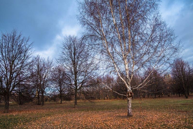 秋天风景在一个多云晚上忧郁有很多 与凋枯的叶子的偏僻的树在落寞浩瀚中 免版税库存图片