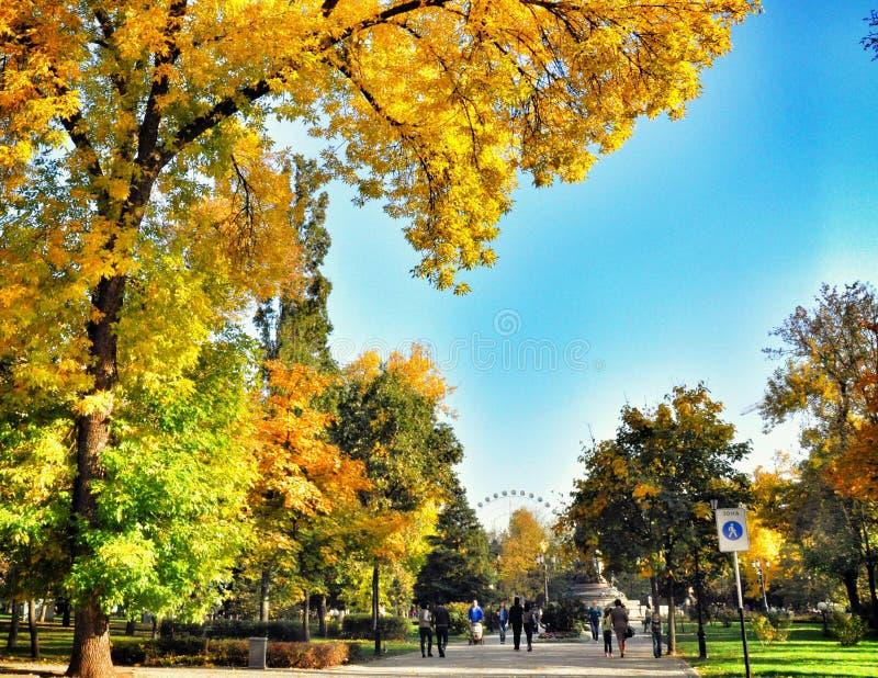 秋天风景在公园区域 免版税图库摄影