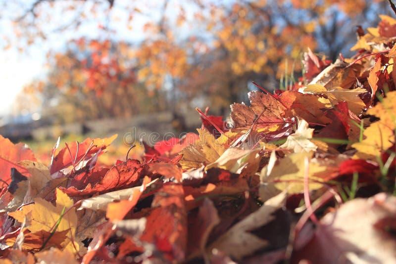 秋天风景在城市公园 图库摄影