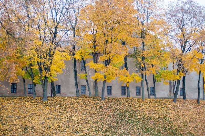 秋天风景美好的金黄秋天风景在公园 森林是开花黄色 图库摄影