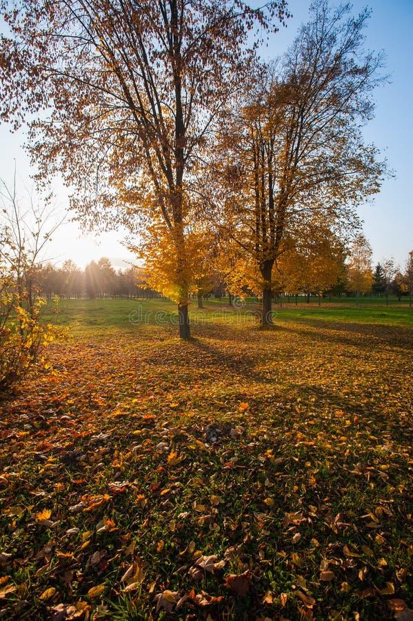 秋天风景美好的金黄秋天风景在公园 森林是开花黄色 库存照片