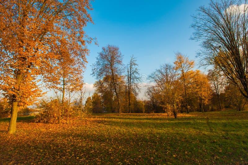 秋天风景美好的金黄秋天风景在公园 森林是开花黄色 免版税图库摄影