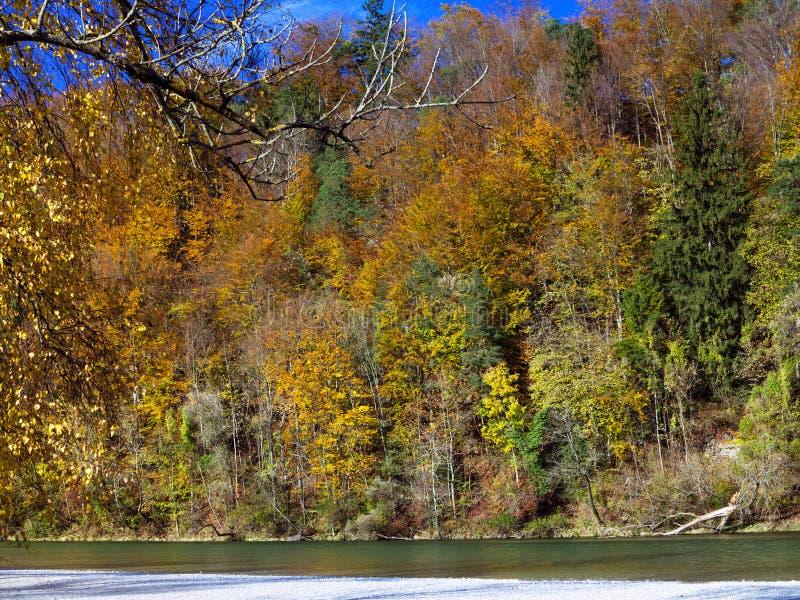 秋天风景背景 有金黄叶子的森林沿河,在阳光下 镇定和平静的场面 免版税库存图片