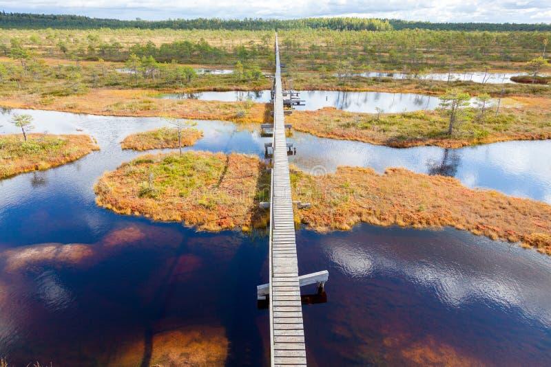 秋天风景顶视图  巨大的沼泽在爱沙尼亚 库存图片