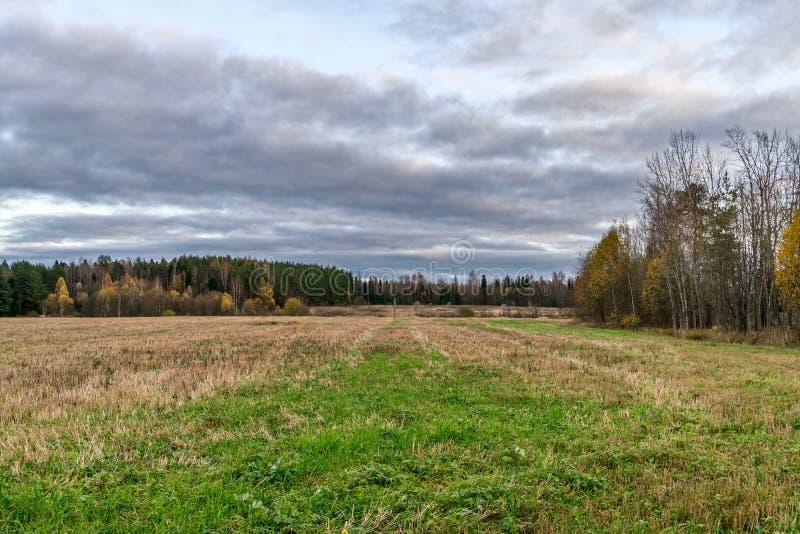 秋天风景,领域,染黄的树在森林里,低阴暗云彩 库存图片