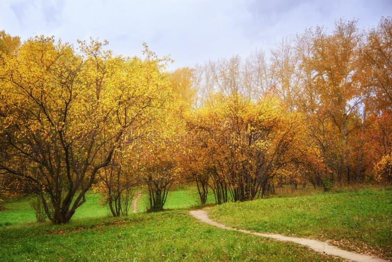 秋天风景:走道道路在包括Wilding苹果树和桦树的森林里晴天 图库摄影