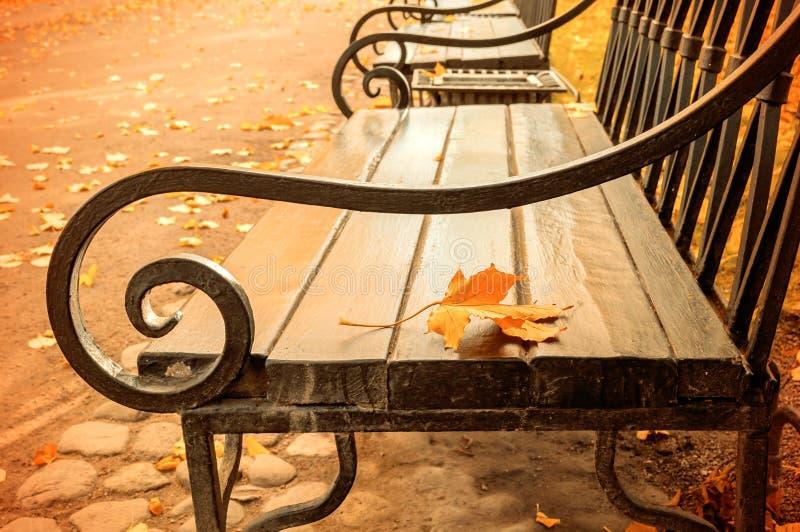 秋天风景-在木偏僻的长凳的被染黄的秋天叶子在秋天公园 库存图片